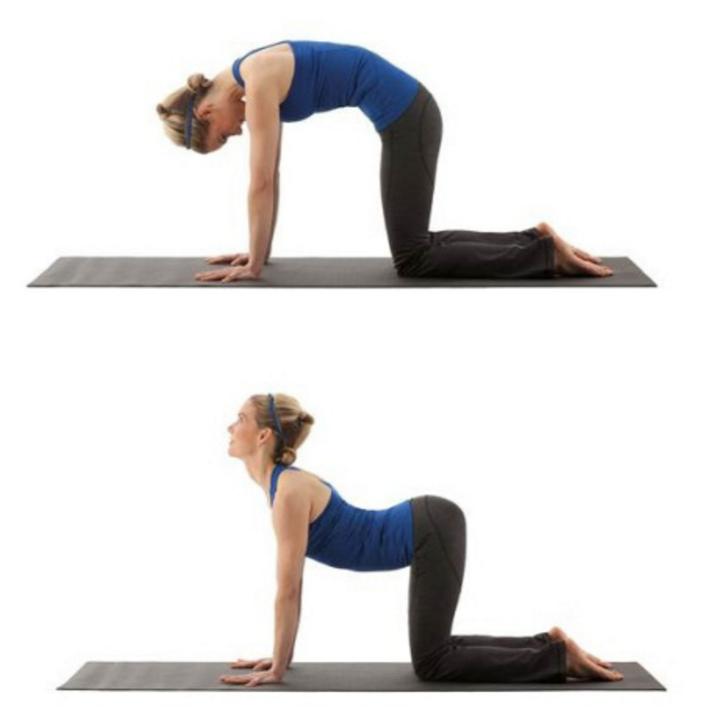 Übung für bessere Körperhaltung - Cat and Camel Stretch