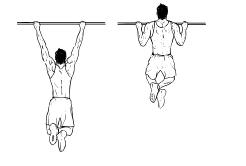 Fit ohne Geräte - Rücken - Pull Ups