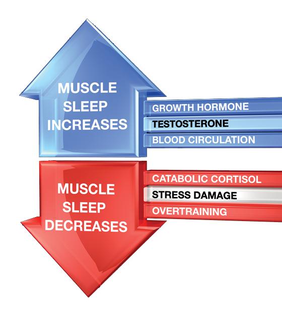 Auswirkungen von Schlaf auf den Muskelaufbau