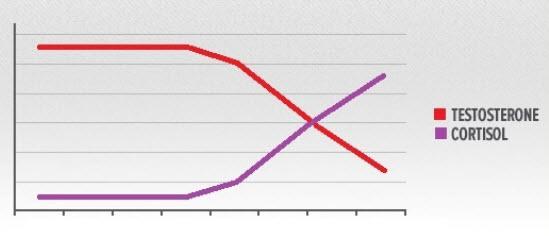Umso höher der Cortisolwert, desto tiefer der Testosteronspiegel